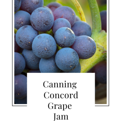 Canning Concord Grape Jam
